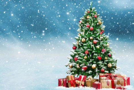 D'où vient le sapin de Noël ?
