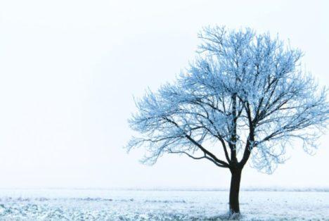 Par un très froid Noël blanc...